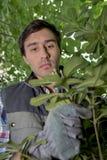 Куст утески садовника ландшафта Стоковые Фото