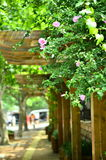 Куст цветка в QingDao, Китае Стоковое фото RF