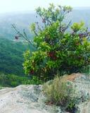 Куст ягоды в горах Стоковые Изображения RF