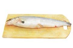кухня рыб классн классного сырцовая Стоковое Изображение RF