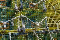 Куча баков омара Стоковое Изображение RF