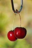 Куча вишни Стоковое фото RF