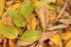 Куча высушенных листьев Стоковые Фотографии RF