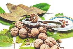 Куча грецких орехов лежа на листьях Около Щелкунчика и поддонника Стоковые Изображения