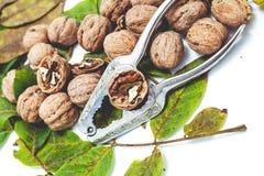 Куча грецких орехов лежа на листьях Около Щелкунчика металла Стоковое фото RF