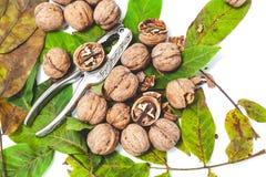 Куча грецких орехов лежа на листьях Около Щелкунчика металла Стоковые Фотографии RF