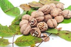 Куча грецких орехов лежит na górze листьев на белизне Стоковая Фотография RF