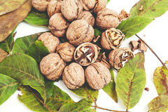 Куча грецких орехов лежит na górze листьев на белизне Стоковые Фото