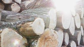Куча деревянных журналов готовых на зима видеоматериал