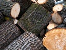 Куча древесины входит в систему край леса стоковые фото