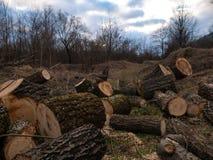 Куча древесины входит в систему край леса стоковое изображение