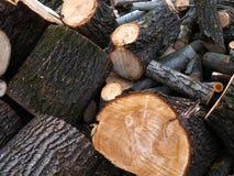 Куча древесины входит в систему край леса стоковое изображение rf
