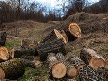 Куча древесины входит в систему край леса стоковое фото