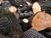 Куча древесины входит в систему край леса стоковые изображения rf