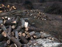 Куча древесины входит в систему край леса стоковая фотография rf