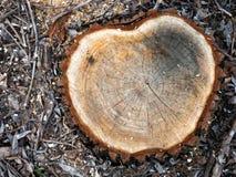Куча древесины входит в систему край леса стоковые изображения