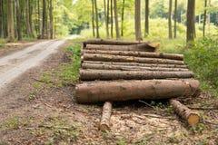 Куча древесины в кусках дерева лиственного леса аранжировала дальше стоковые фото
