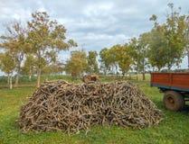 Куча древесины оливкового дерева в луге Стоковые Изображения RF