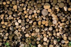 Куча деревянных журналов Стоковые Фото