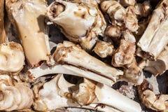 Куча животного bones крупный план Стоковое Изображение