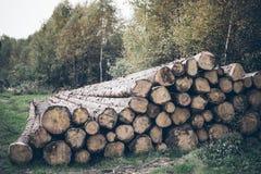 Куча журнала, стволы дерева в лесе Стоковая Фотография