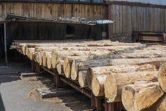 Куча журналов лежит на платформе леса, лесопилке Обрабатывать тимберса на лесопилке стоковые фото