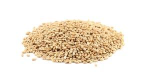 Куча зерен пшеницы вращая на белом акции видеоматериалы