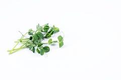 Куча зеленого гороха пускает ростии, микро- зеленые цвета на белой предпосылке Здоровая концепция еды свежего сада производит орг Стоковое Фото