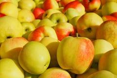 Куча золотистых яблок Стоковые Фотографии RF