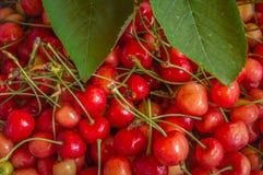 Куча зрелых красных вишен держала на полке для продажи в магазине Стоковые Изображения