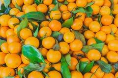 Куча зрелых сочных сладостных tangerines с зелеными листьями Стоковая Фотография RF