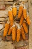 Куча зрелых corns Стоковая Фотография RF