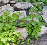 Куча камней на траве Стоковое фото RF