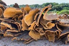 Куча коры дерева пробочки как сырцовый товар стоковое изображение rf