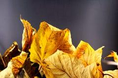 Куча красочной листвы осени Стоковые Изображения RF