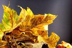 Куча красочной листвы осени Стоковые Фото