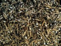 Куча крошечных высушенных сардин продавая в рыбном базаре Стоковые Фотографии RF