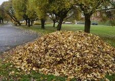 Куча листьев в парке в осени стоковое фото
