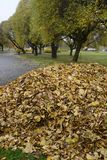 Куча листьев в парке в осени стоковое фото rf