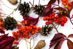 Куча листьев осени, предпосылка конусов сосны чокнутая излишек белая граница листьев собрания красивая красочная от осени Стоковое фото RF