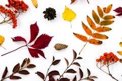 Куча листьев осени, предпосылка конусов сосны чокнутая излишек белая граница листьев собрания красивая красочная от осени Стоковая Фотография