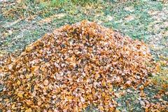куча листьев осени стоковые изображения rf