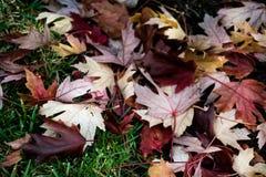 Куча листьев падает с дерева после проливного дождя Стоковая Фотография RF