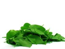 куча листьев Стоковые Изображения RF