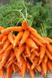 куча морковей свежая Стоковая Фотография RF