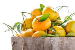 Куча оранжевая свежей от сада Стоковое фото RF