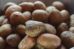 Куча органически, который выросли картошек Стоковая Фотография RF