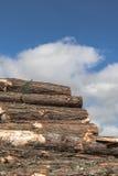 Куча отрезанного дерева Стоковое фото RF