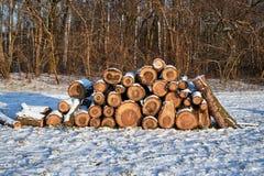Куча отрезанной древесины в зиме в лесе Стоковые Изображения