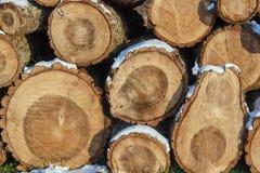 Куча отрезанной древесины в зиме Стоковое Изображение